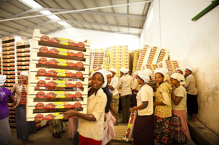 Gli impianti di inscatolamento della Jittu. L'azienda impiega 600 persone, il cui salario oscilla tra i 600 e i 1000 birr al mese (25-40 euro)
