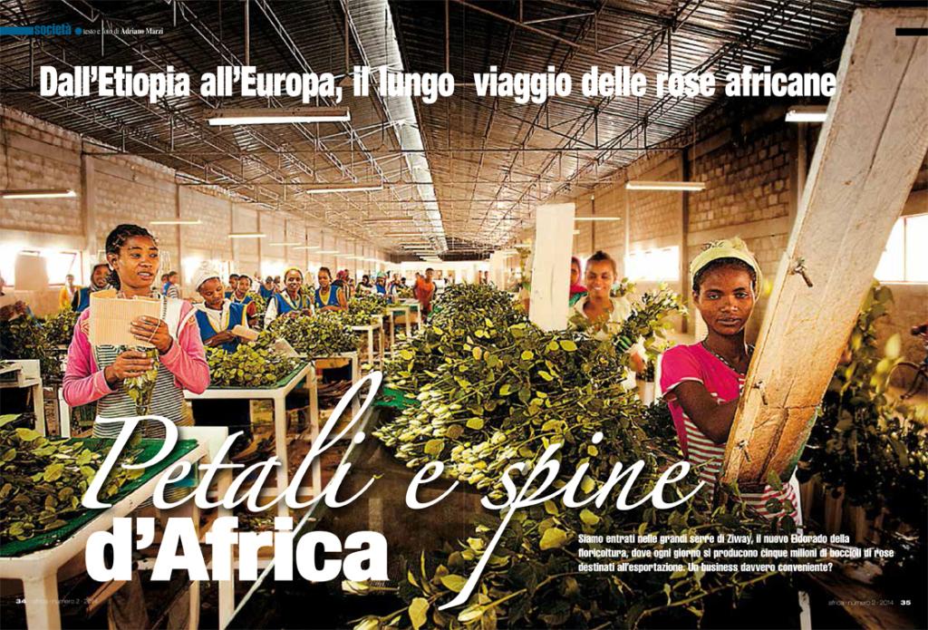petali-e-spine-dafrica-africa-3-14-1