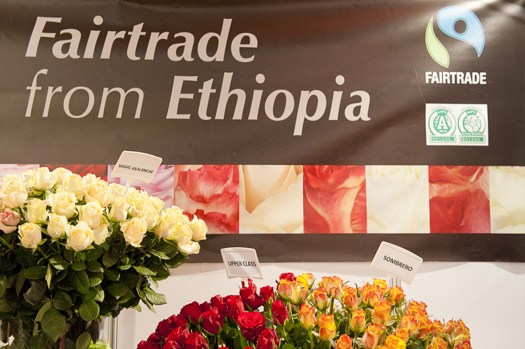 Hortiflora Expo Ethiopia 2013. Many roses companies producing in Ethiopia are certified by Fairtrade Labelling Organisation (Flo), world main fairtrade label