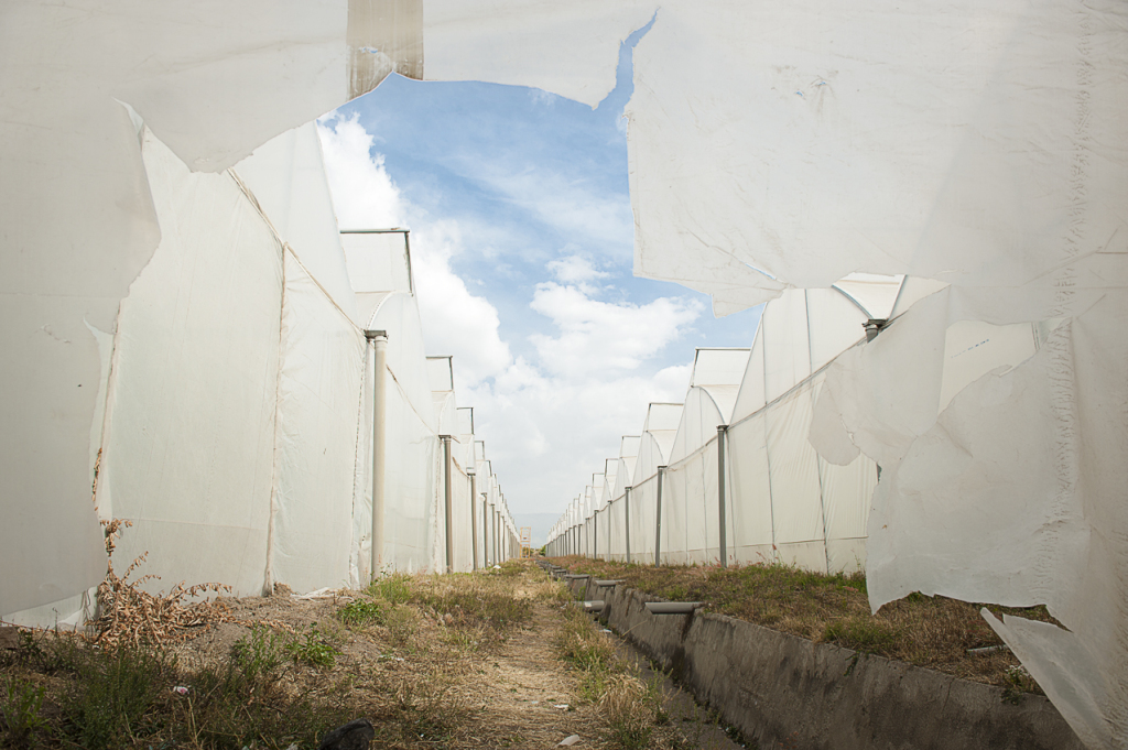 7.Sher greenhouses dump chemicals into the Ziway lake