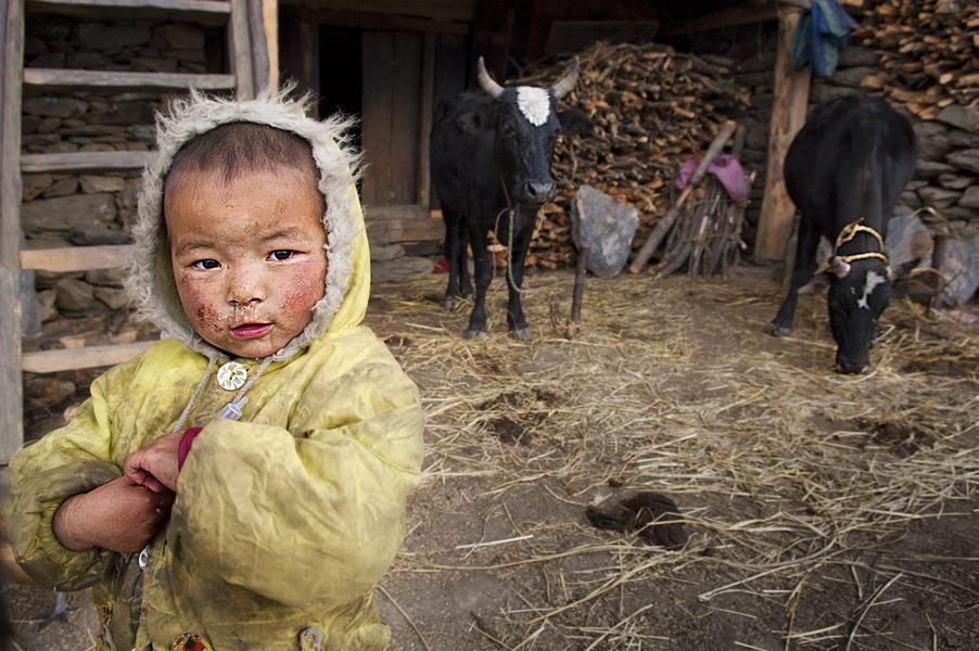 Thuman (Regione di Langtang), 27 aprile 2011: il figlio di rifugiati tibetani davanti alla sua stalla