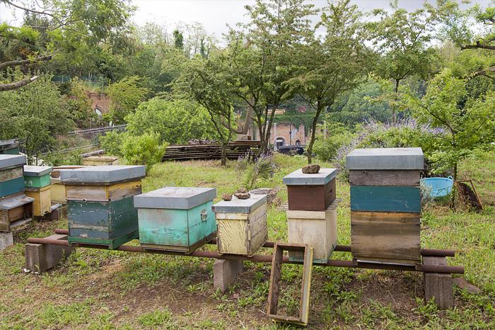 """""""Anche le api, clandestinamente, da circa vent'anni, insieme ad umani, gatti e cani, occupano il Forte Prenestino. Sono diverse famiglie e popolano la collinetta centrale, convivendo con la musica assordante che accompagna alcune iniziative. Sono loro che producono il miele del Forte e contribuiscono a rendere rigogliosa la vegetazione del parco"""", racconta Angelo"""