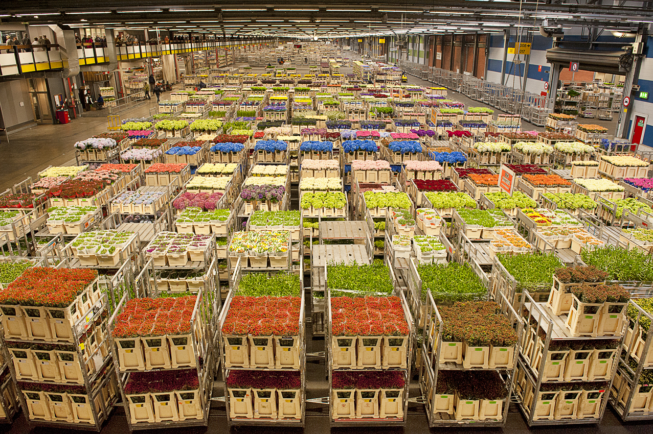 flora-holland-the-major-flower-market-in-the-world