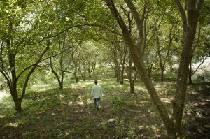 Yorgos Kalivas in his family land. Yorgos is the last Skouries forest inhabitant. His family has been growing here cherries, chestnuts and walnuts for four generation