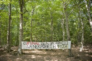 Nogold activists camp in the Skouries forest