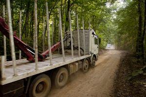 Eldorado tracks crossing Skouries forest