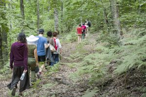 Nogold activists crossing Skouries forest directed to Eldorado site, where they will try to disrupt the work in progress