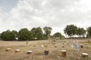 Honey boxes in Paliohori, one of the villages affected by Skouries mining