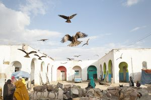 Harar meat market. Islam arrived in Eastern Ethiopia in the 7th Century