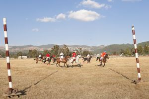 Polo match at Jalmeda Park. Addis is the home of a great bourgeois awakening